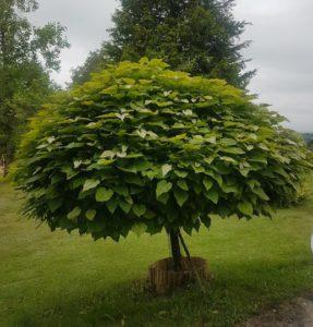 Un petit arbre qui n'a l'air de rien
